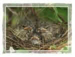 C111 Sparrow Nest