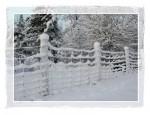 C116 Snowy Fence