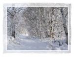 C117 Snowy Trail