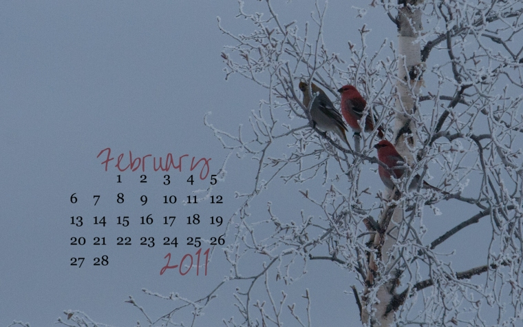 pine grosbeak february