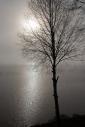 mist as dawn