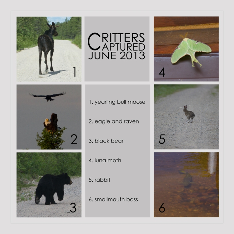 critters201306-2