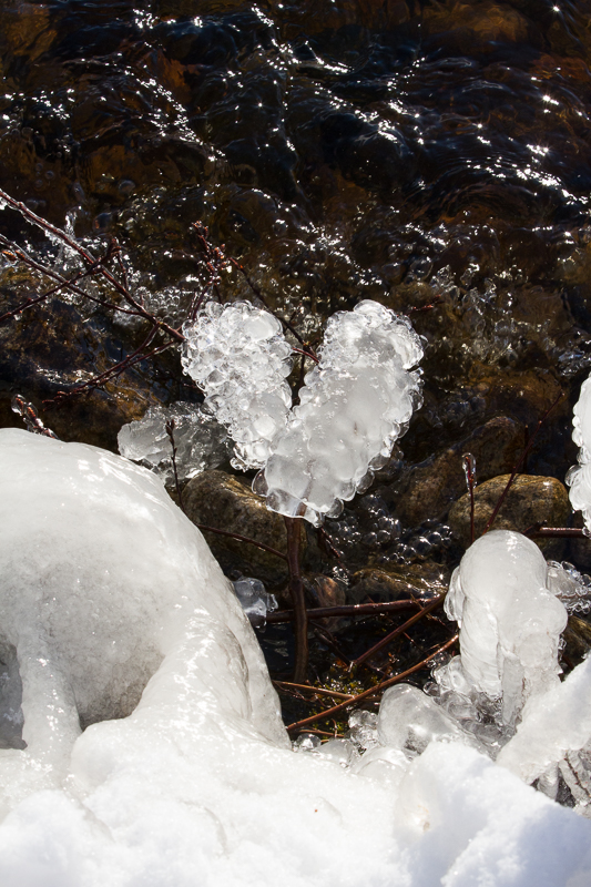 branches covered in frozen bubbles shaped in a heart