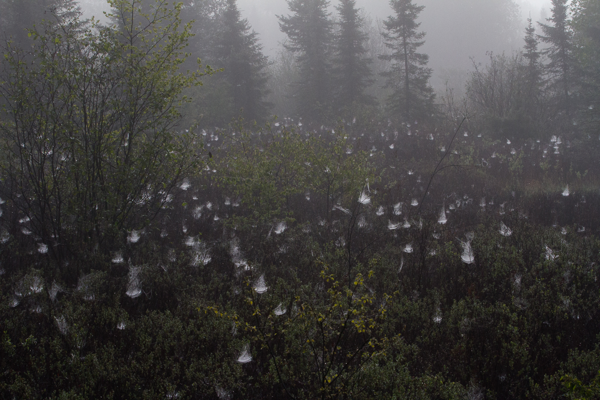 dew in a forest clearing