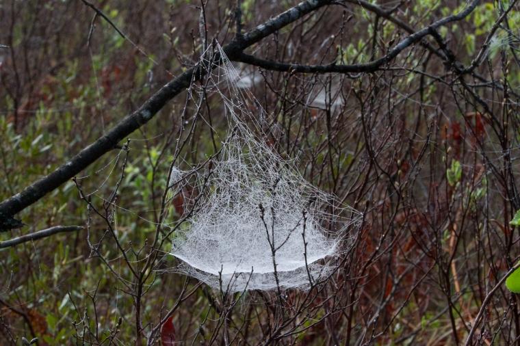 Web hammock